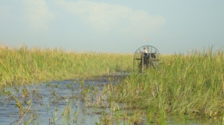 Everglades with fan boat